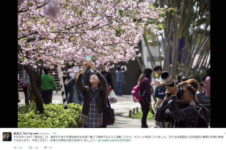 新竹市政府指蔡英文總統昨天在推特上使用的賞櫻照,就是新竹公園的櫻花。照片/新竹市政府提供