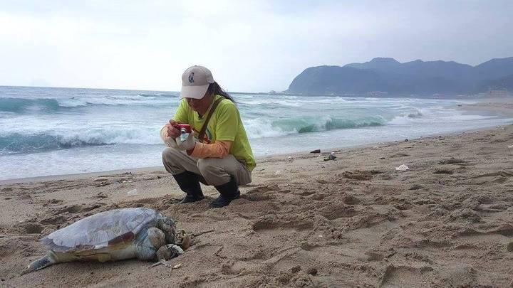 陳信助發動淨灘兩周年前夕,遇見兩隻死龜,像是在無言抗議,他難過的哽咽掉淚。圖/陳信助提供