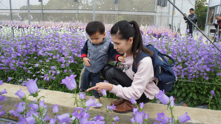 不少民眾攜家帶眷前往賞花。記者李京昇/攝影