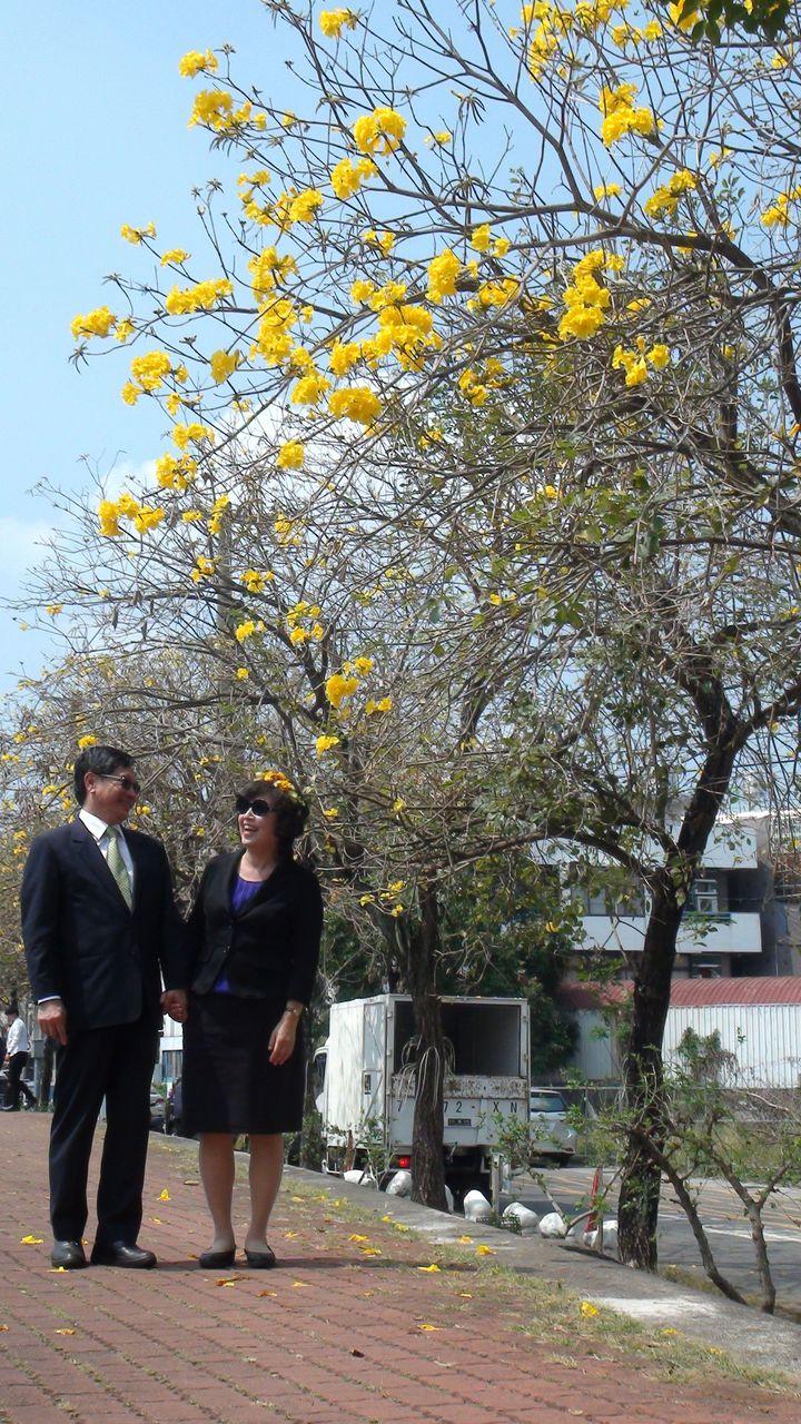 嘉義市長涂醒哲和妻子鄭玉娟牽手漫步在黃花風鈴木下,浪漫百分百。記者王慧瑛/攝影