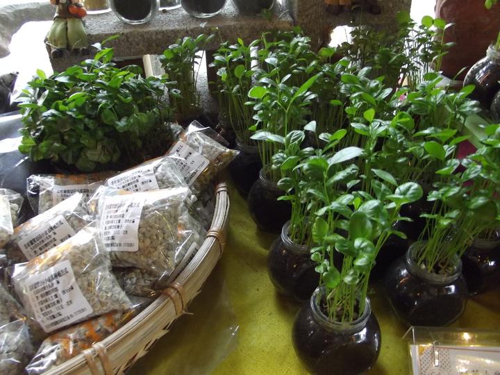 金桔盆栽。記者謝恩得/攝影