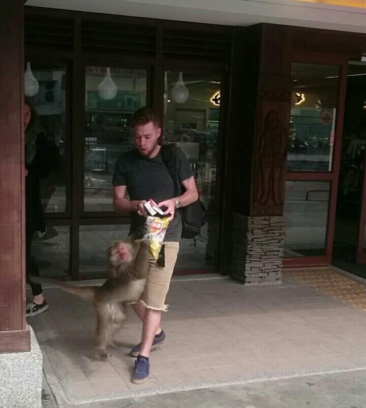 猴王就撲向一名外籍遊客,想搶奪他手上的食物。圖/賴姓民眾提供