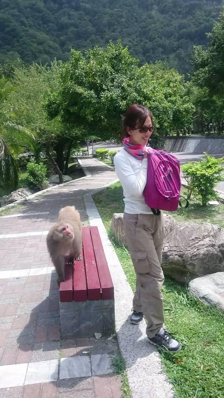 一名女子邊享受大自然邊吃著食物,也成為猴王強奪的對象。圖/賴姓民眾提供
