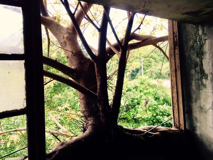 老樹根附著在牆壁上,老建築的懷舊氛圍,值得細細品味。記者郭政芬/攝影