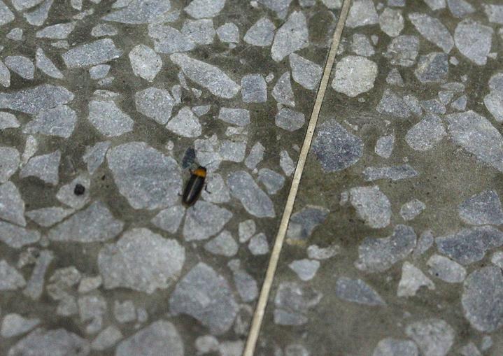 黃緣螢。記者張雅婷/攝影