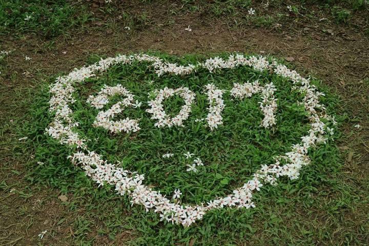 雲林客家桐花祭「浪漫桐雨遊客庄」4月底即將登場,現場桐花綻放盛開,遊客將散落的桐花排成圖案,吸引眾人目光。記者胡瑋芳/攝影
