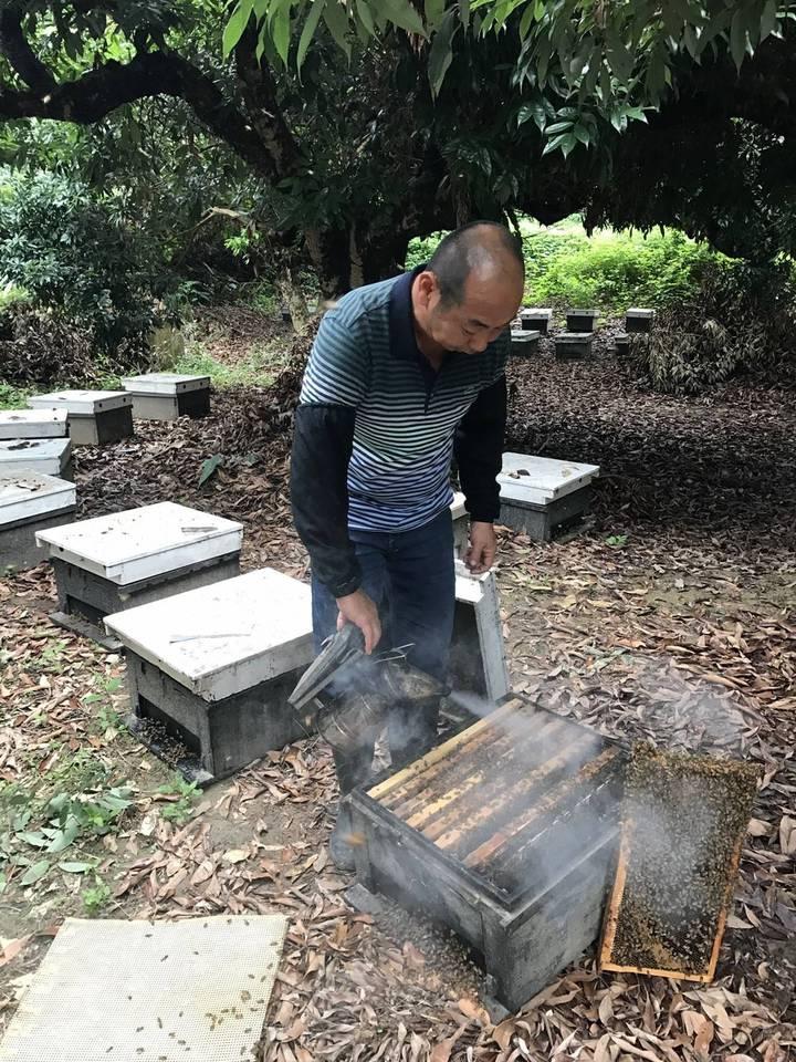 天候異常,龍眼花期延後又遇藥害,今年龍眼蜜產量少,價格將創新高。圖/徐陳森提供