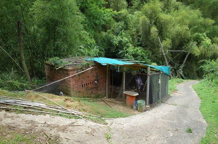 苗栗縣卓蘭鎮山區一處雞舍遭石虎打劫,十多隻雞失蹤。臉書「貓徑地圖王小明」提供