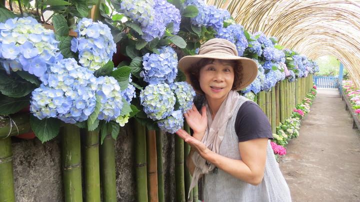 山芙蓉咖啡主人翁美珍發想3年,今年搭上政府「浪漫台3線」列車,辦理浪漫繡球花季。記者范榮達/攝影