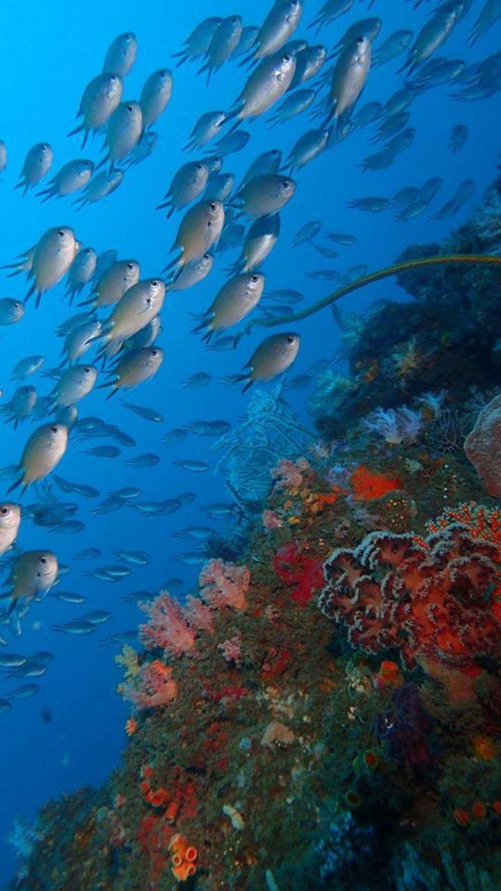 潮境保育區經一年休養生息,生態變好,魚也變多了。圖/資料照片