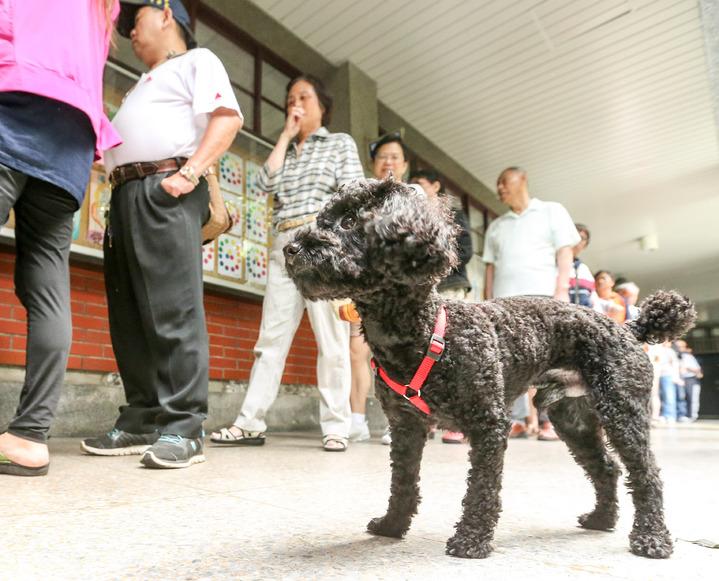 有民眾投票順便遛狗。記者鄭清元/攝影
