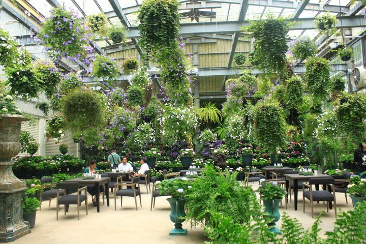 這個園內除了繡球花,還有200種的堇蘭、200多種的海棠,50多種日本鳶尾花及台灣常見的本土花卉。記者郭政芬/攝影