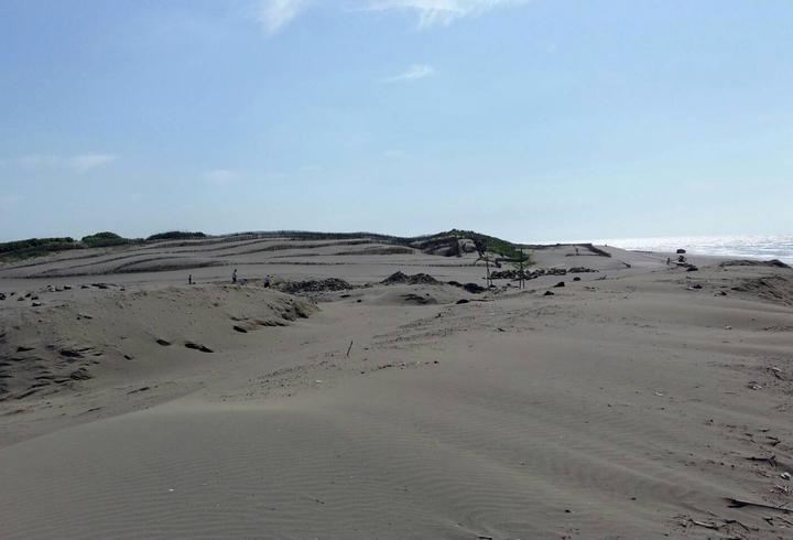 桃園市大園區竹圍漁港南岸漂沙惡化,嚴重淹沒原本沿岸防風林,海岸侵蝕陸地,原有自行車道、步道完全淹沒在一片沙海(見圖),十分嚴重。記者曾增勳/攝影