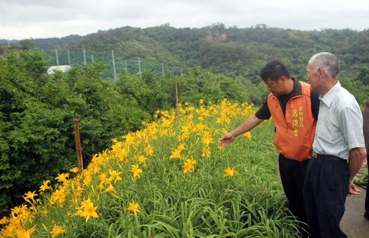 78歲老農林木生這幾天不採花,供民眾賞花。記者林敬家/攝影