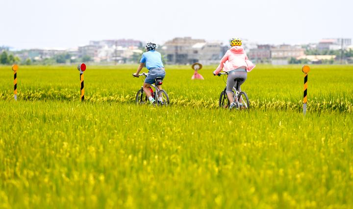 暢遊宜蘭縣冬山鄉三奇伯朗大道,騎單車是最好的方法之一。記者程宜華/攝影