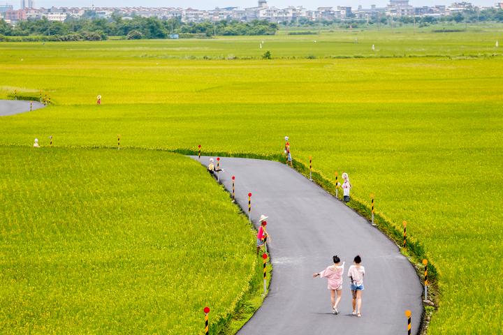 宜蘭縣冬山鄉三奇伯朗大道一片綠油油稻田,吸引不少遊客。記者程宜華/攝影