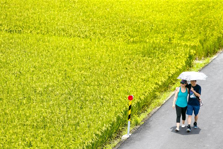 宜蘭縣冬山鄉三奇伯朗大道一片綠油油,縱使天氣炎熱,民眾依舊撐著傘漫步田間。記者程宜華/攝影