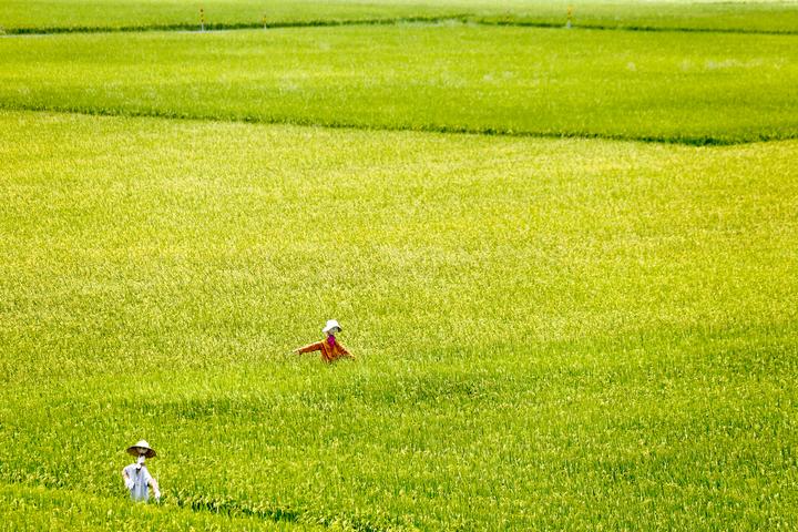 宜蘭縣冬山鄉三奇伯朗大道,田間有許多稻草人。記者程宜華/攝影