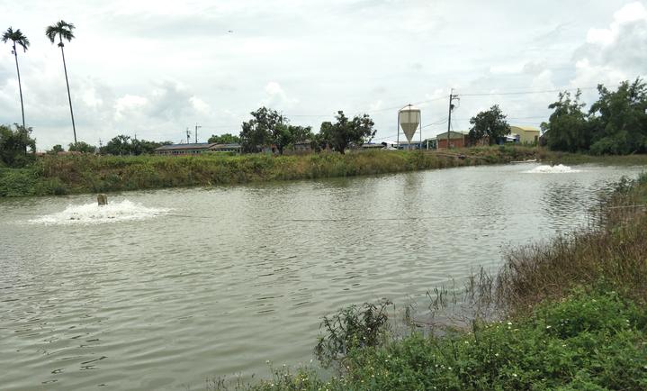 台南是台灣鯛養殖重鎮,不時可見專門飼養台灣鯛魚塭。記者謝進盛/攝影