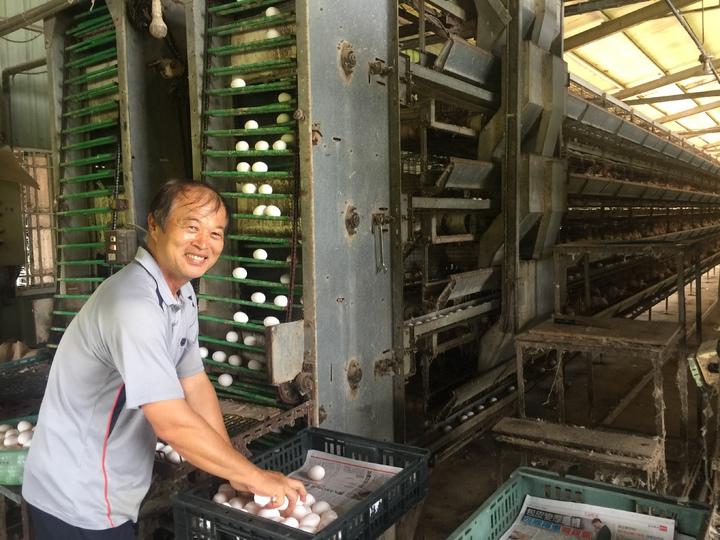 雞蛋價格跌到10多年來最低,蛋農說,比成本還低。記者吳政修/攝影