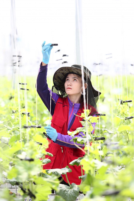 seedream是開始試用大數據的智慧農場,可栽培期間是一般農場的兩倍,生產量是一般農場的三倍。記者蘇健忠/攝影