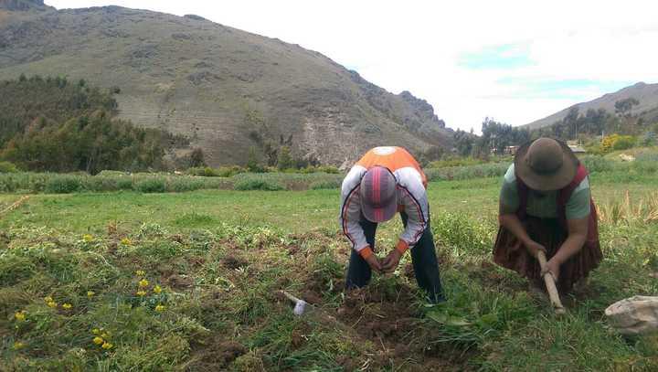 尋回傳統的耕作模式,是秘魯農夫對抗極端天氣的方法。記者董俞佳/攝影