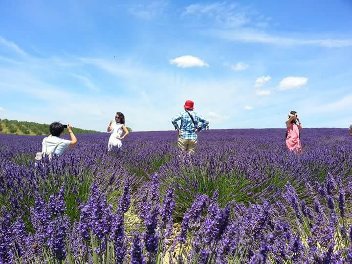 南法普羅旺斯美景當前,領隊導遊是見證美景四季變化的見證者。圖/Claire提供