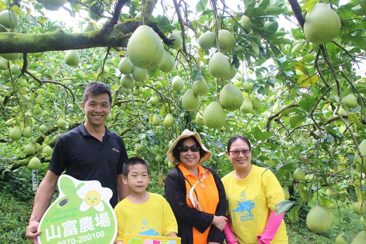 花壇果農余仁豪(左一)管理文旦柚果園,最近忙著收成。記者林敬家/攝影