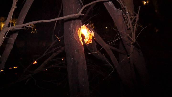 山林火警持續蔓延,附近的樹木都被跳躍的火星波及。記者蔡家蓁/攝影