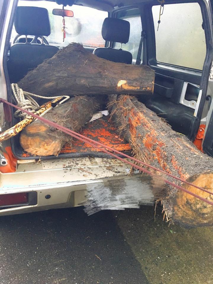 陳姓男子撿拾扁柏、紅檜等漂流木遭逮。圖/警方提供