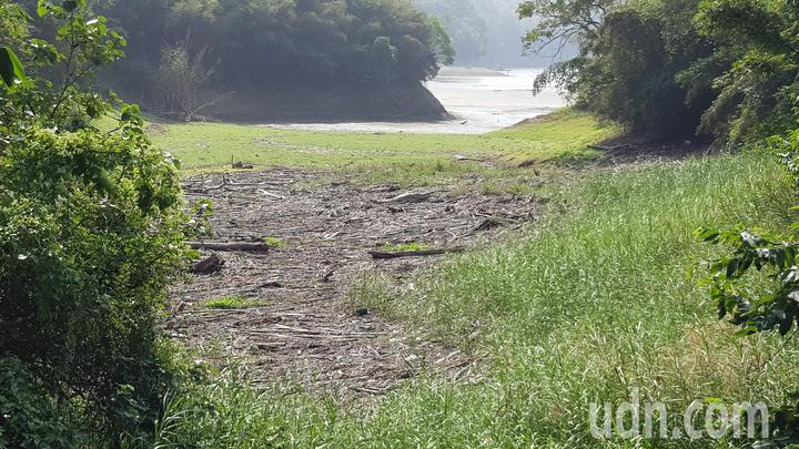 明德水庫岸邊的漂流木已經離水很遠。記者黃瑞典/攝影