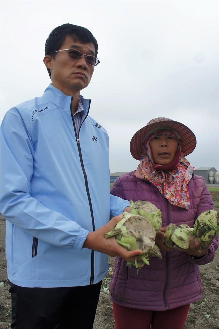 雲林縣農業缺工嚴重,近日有農民因為找不到工人採收,只好忍痛耕鋤價值30萬元的甘藍,今天多位農民向縣府、縣議員李明哲(左)陳情。記者陳雅玲/攝影