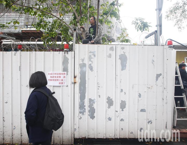 護樹團體今早爬上樹,以肉身護樹。記者程宜華/攝影
