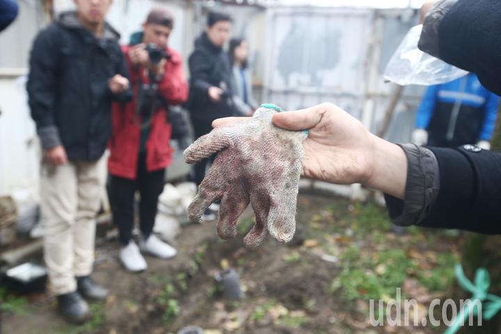 護樹團體與工人發生爭執,護樹團體聲稱找到ㄧ只工人因拒馬受傷而沾滿血的手套。記者程宜華/攝影