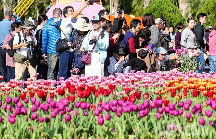賞花人潮眾多,拍照留念都得卡位。記者鄭清元/攝影
