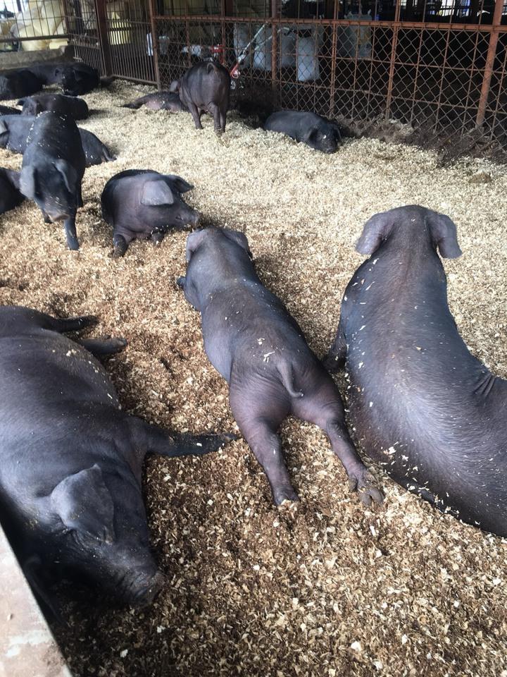 南投國姓鄉「三隻小豬生活農場」負責人趙姓姊妹也會參與友善市集,分享飼養健康豬的理念。圖/余國信提供