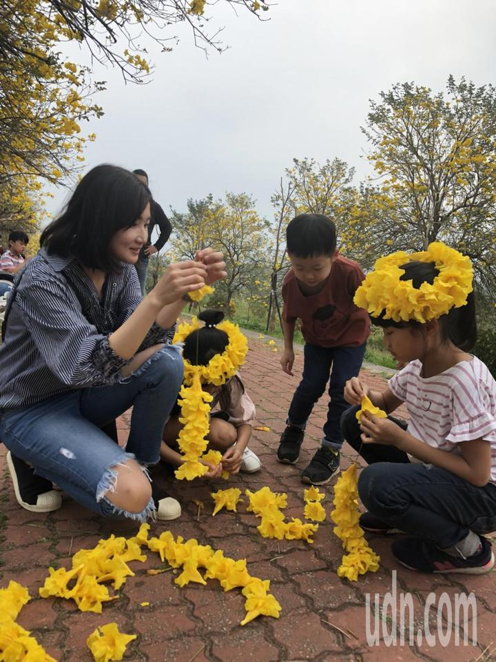 3月起,中南部的黃花風鈴木陸續盛開,一片金黃,亮麗迷人。記者王慧瑛/攝影