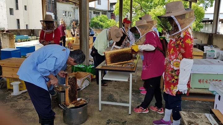 頭屋鄉明德社區養蜂班志工切除蜂蓋,準備搖蜜收成。記者黃瑞典/攝影