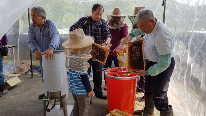 頭屋鄉明德社區養蜂班首度收成,志工賣力搖蜜。記者黃瑞典/攝影