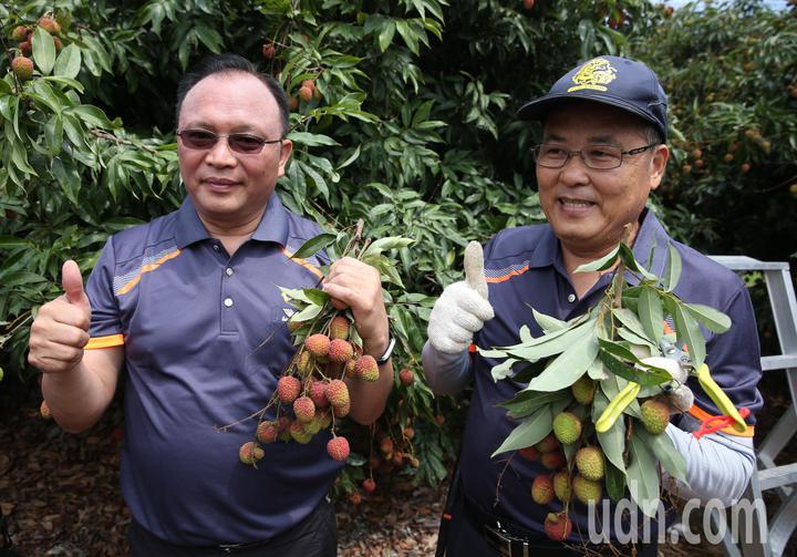 農委會林聰賢(左)率領先派遣8人部隊前往大樹荔枝園,支援玉荷包荔枝採收。記者劉學聖/攝影
