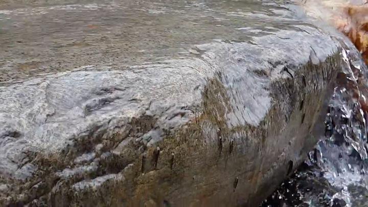 人禾環境倫理基金會在東北角追蹤日本禿頭鯊上溯的畫面,爬得非常辛苦,但終於可以盡快到上游開展魚生。圖/ㄏ擷取自臉書都市河溪論壇