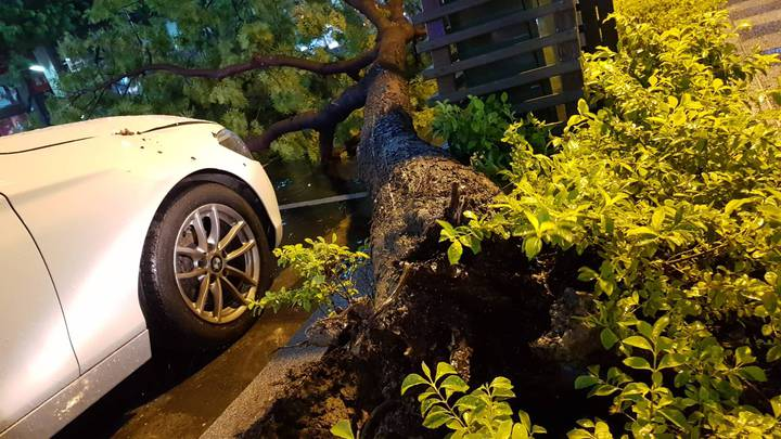 高雄晚上颳強風路樹壓倒雙B車。記者謝梅芬/翻攝