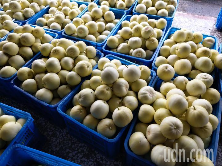 宜蘭壯圍鄉民欣瓜果友善農場負責人陳渭川,自產自銷蜜香瓜,吸引識貨者直接到產地購買。記者戴永華/攝影