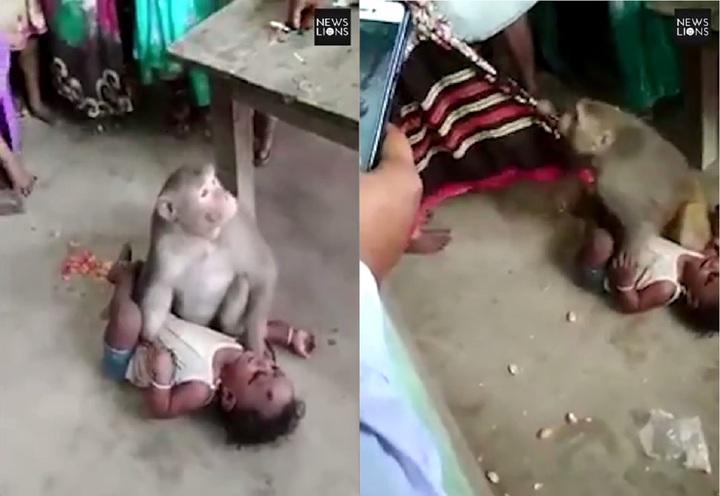 印度南部卡納塔克邦小村落,日前驚傳有猴子強擄男嬰,所幸最後有人趁猴子分心時,快速將小孩抱走,才不至於釀成悲劇。圖片擷取YouTube/Newslions Media影片