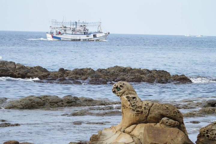 基隆鳥會理事長沈錦豐說,打算明年提報這隻海豹為基隆自然紀念物,它的潛力不輸野柳女王頭。圖/Tsan-Lieh Kuo提供