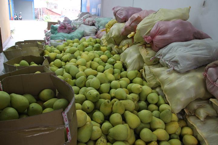 芬園鄉施佳驊1萬斤文旦柚供廣廣寧樂善團義賣,所得全數捐出。記者林敬家/攝影