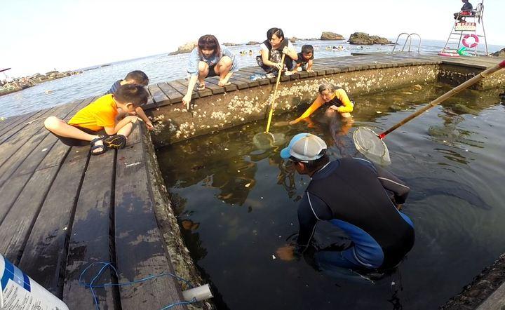 在龍洞灣海洋公園的一隻烏魚身上套著一只瓶蓋塑膠環,為了替牠解圍,救生教練和遊客展開圍捕救魚行動。記者牟玉珮/攝影