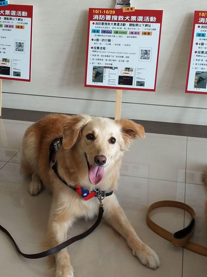 雪在107年全國搜救犬網路票選活動,得票暫居第3。圖/消防局提供