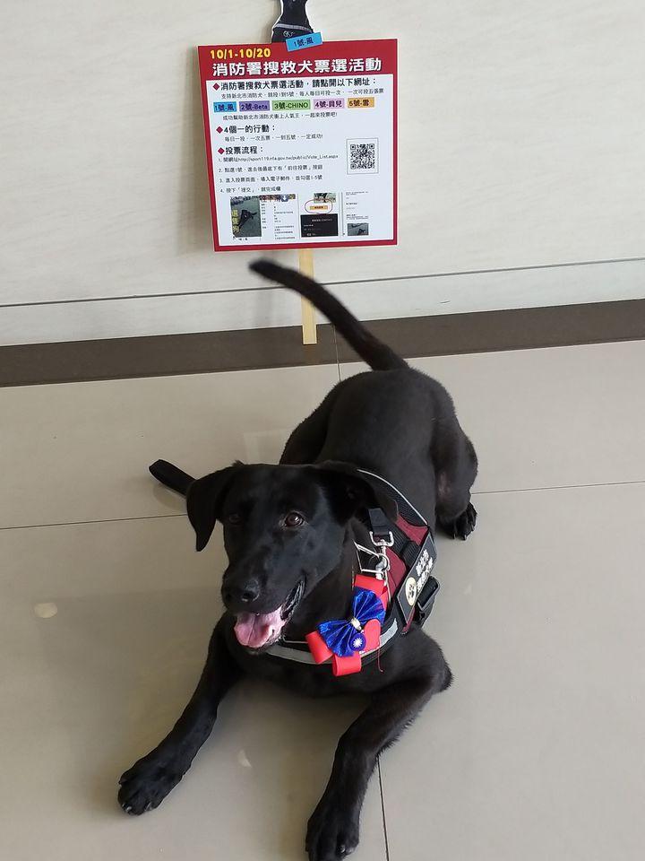 風在107年全國搜救犬網路票選活動,得票暫居第6。圖/消防局提供