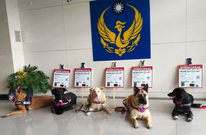 新北市消防局特搜大隊的5隻明星搜救犬,明天要參加國慶升旗。圖/消防局提供